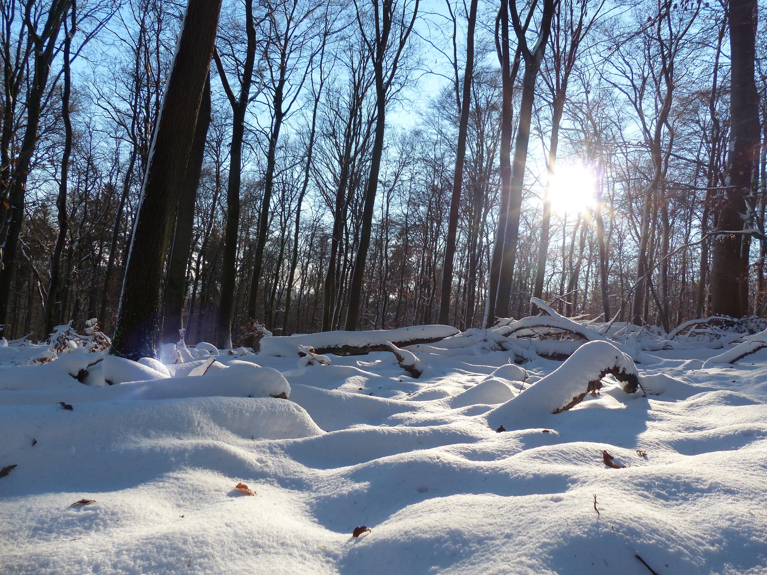 Schneekohtenfahrt 2014 (41)